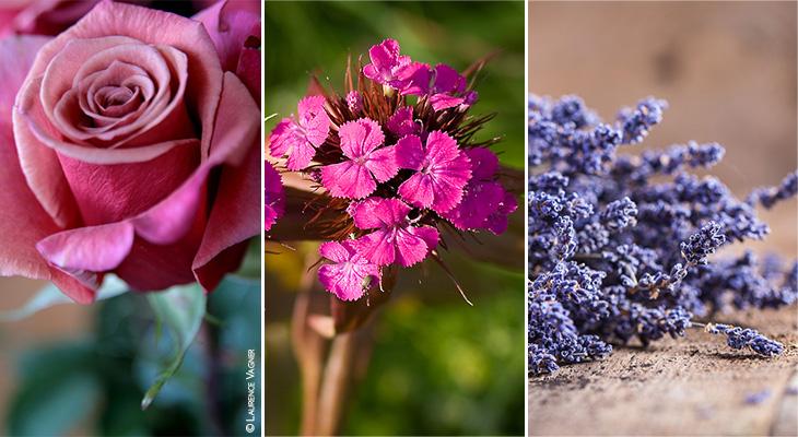 rose-lavande-oeillet-fleurs