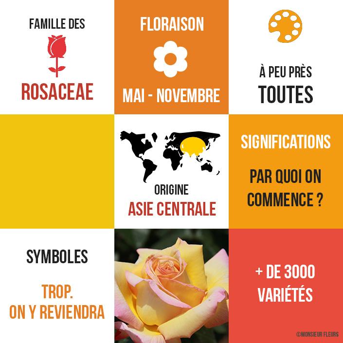rose-monsieur-fleurs