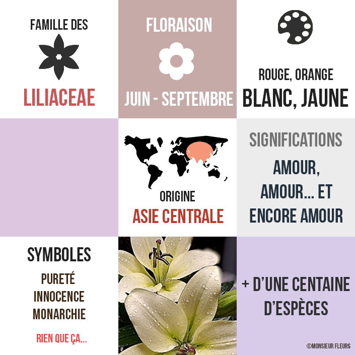 lys-monsieur-fleurs