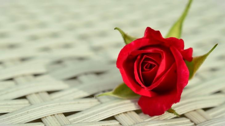 roses-rouges-monsieur-fleurs