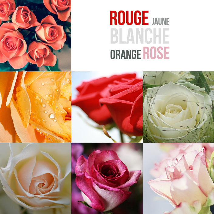 offrir-des-roses-monsieur-fleurs