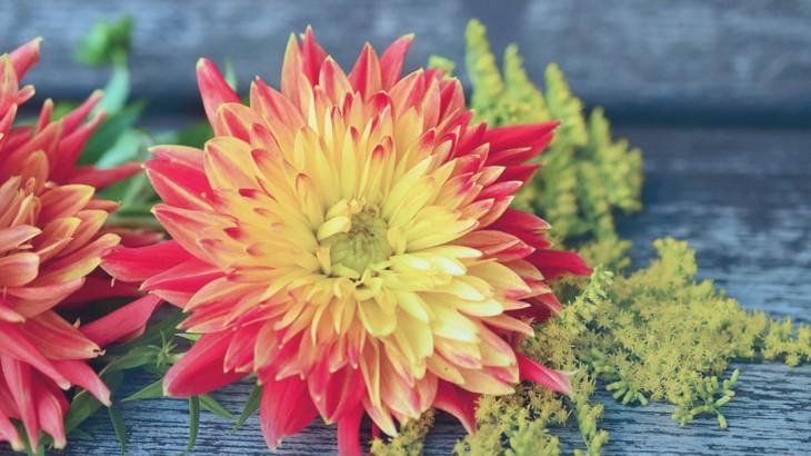 fleurs-automne-monsieur-fleurs