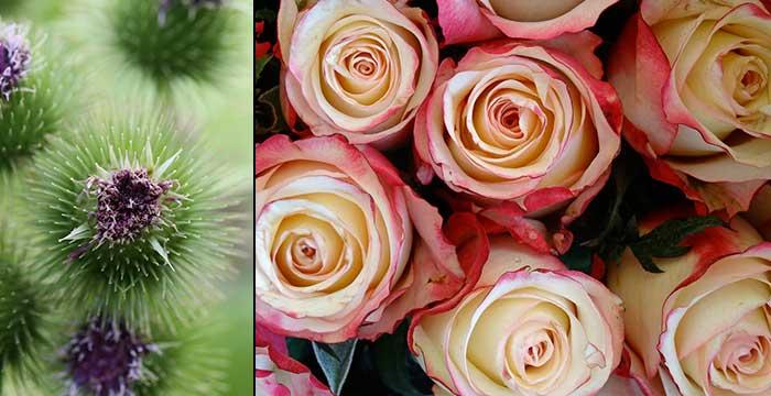 roses-chardons-centre-de-table-monsieur-fleurs