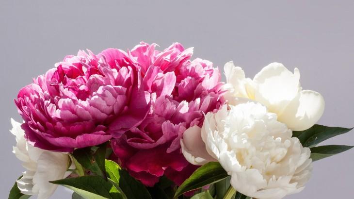 pivoines-monsieur-fleurs